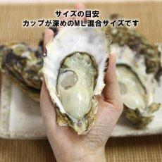 画像4: 三重白石湖産 牡蠣 渡利かき (4)