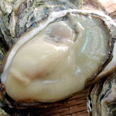 画像7: 三重白石湖産 牡蠣 渡利かき (7)