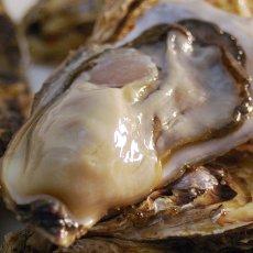 画像7: 北海道知内産 殻付牡蠣 (7)