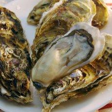 画像6: 北海道知内産 殻付牡蠣 (6)