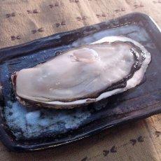 画像4: 北海道知内産 殻付牡蠣 (4)
