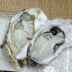 画像3: 北海道知内産 殻付牡蠣 (3)