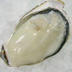 画像12: 三陸志津川産 荒島牡蠣 (12)