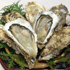 画像2: 三陸志津川産 荒島牡蠣 (2)