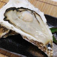 画像3: 三陸志津川産 荒島牡蠣 (3)