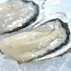 画像4: 三陸志津川産 荒島牡蠣 (4)