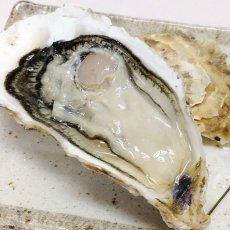 画像6: 三陸志津川産 荒島牡蠣 (6)