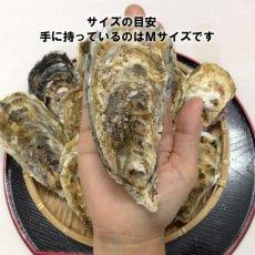 画像7: 三陸志津川産 荒島牡蠣 (7)