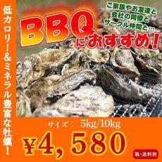 画像1: 【お急ぎ便】三陸産志津川産 バーベキュー用ふぞろい殻付牡蠣 (お届け地域限定) (1)