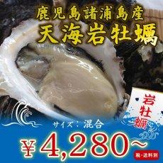 画像1: 鹿児島諸浦島産 天海岩牡蠣 (1)