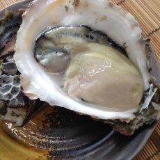 画像5: 鹿児島諸浦島産 天海岩牡蠣 (5)