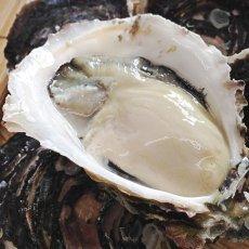 画像3: 鹿児島諸浦島産 天海岩牡蠣 (3)