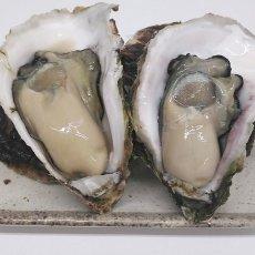 画像4: 鹿児島諸浦島産 天海岩牡蠣 (4)