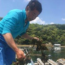 画像7: 鹿児島諸浦島産 天海岩牡蠣 (7)