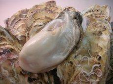 画像4: 北海道寿都産 殻付牡蠣 寿牡蠣 (4)