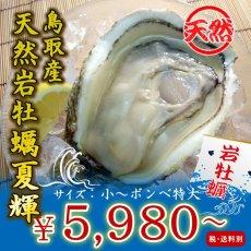 画像1: 鳥取産 天然岩牡蠣「夏輝」 (1)