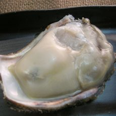 画像4: 鳥取産 天然岩牡蠣「夏輝」 (4)
