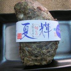 画像6: 鳥取産 天然岩牡蠣「夏輝」 (6)
