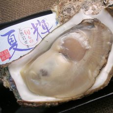 画像2: 鳥取産 天然岩牡蠣「夏輝」 (2)