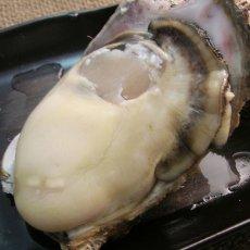 画像8: 鳥取産 天然岩牡蠣「夏輝」 (8)
