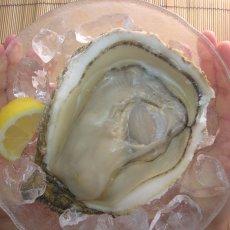 画像5: 鳥取産 天然岩牡蠣「夏輝」 (5)
