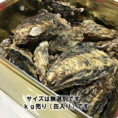 画像8: 岡山牛窓産 むき身牡蠣 (8)
