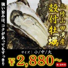 画像1: 三陸山田湾産 殻付牡蠣 (1)