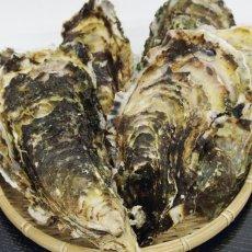画像4: 【お急ぎ便】三陸山田湾産 殻付牡蠣 (お届け地域限定) (4)