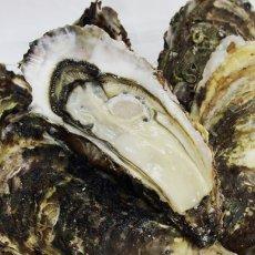 画像11: 三陸山田湾産 殻付牡蠣 (11)