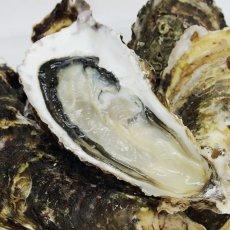 画像6: 三陸山田湾産 殻付牡蠣 (6)