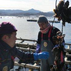 画像10: 【お急ぎ便】三陸山田湾産 殻付牡蠣 (お届け地域限定) (10)