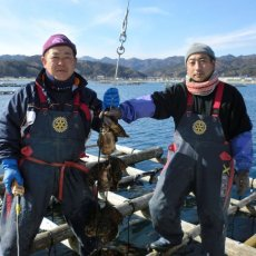 画像2: 三陸山田湾産 牡蠣のガンガン焼き (2)