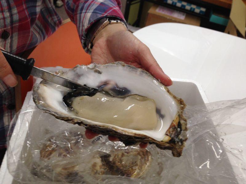 【牡蠣の?】初めてですが、殻がむけるか心配です・・・