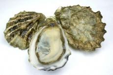 【牡蠣の?】アメリカ産のブランド牡蠣クマモトオイスター
