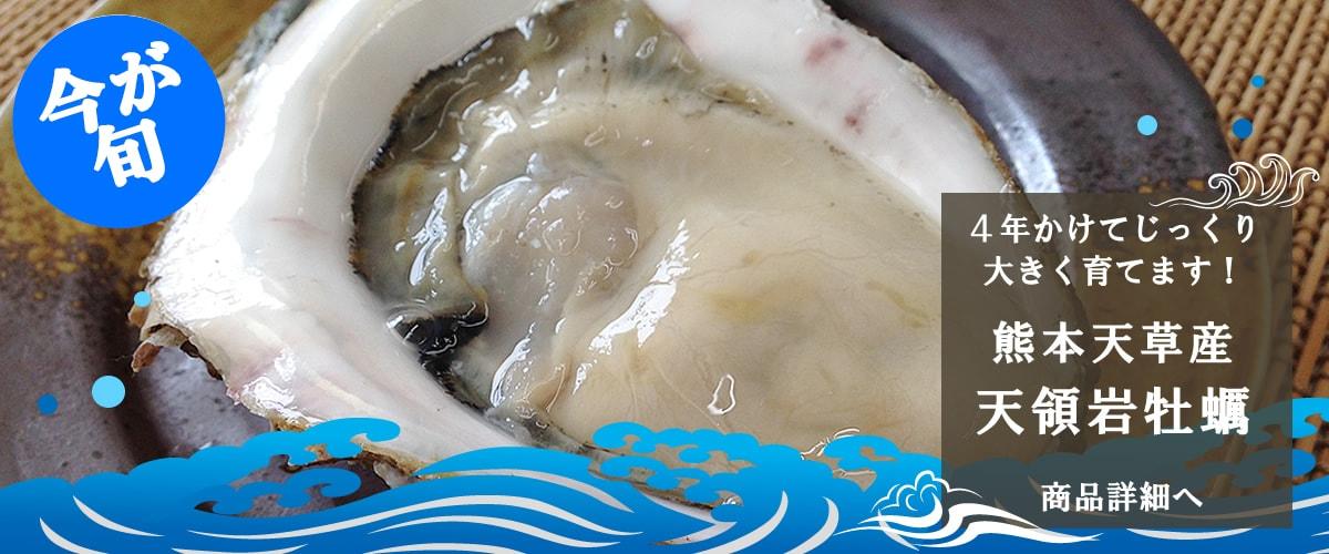 熊本天草産 天領岩牡蠣 商品詳細へ