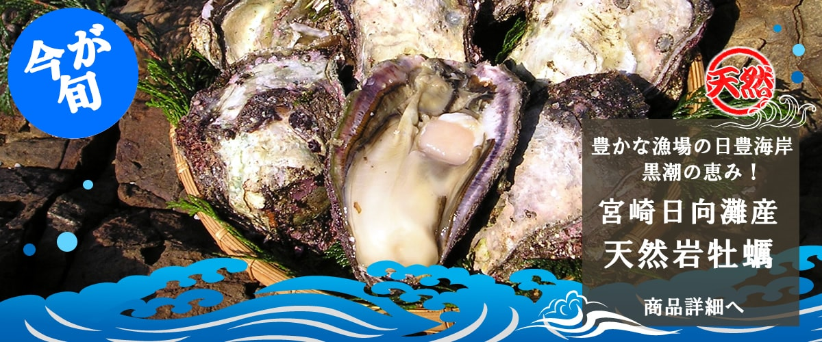 宮崎日向灘産 天然岩牡蠣 商品詳細へ