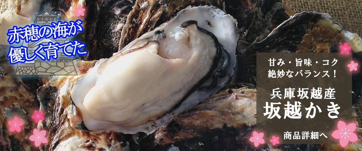 赤穂坂越産 殻付牡蠣 商品詳細ページ