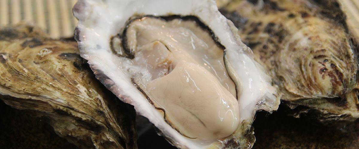 北海道厚岸産 丸牡蠣「まるえもん」