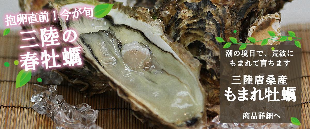 三陸唐桑産 殻付牡蠣