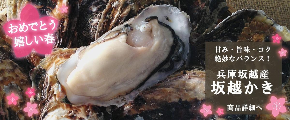 赤穂坂越産 殻付牡蠣