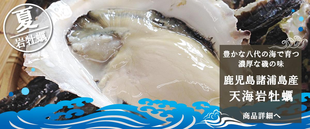 鹿児島諸浦島産 天海岩牡蠣 商品詳細へ
