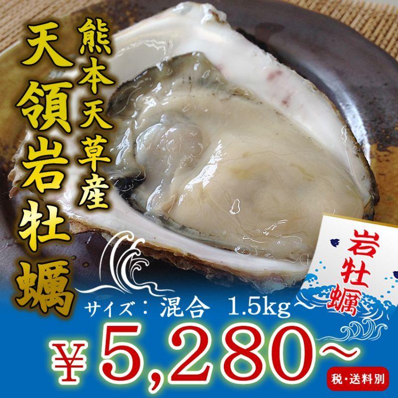 画像1: 熊本天草産 天領岩牡蠣 (1)