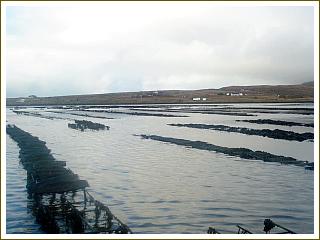 雄大な自然に囲まれたドネゴールの養殖場