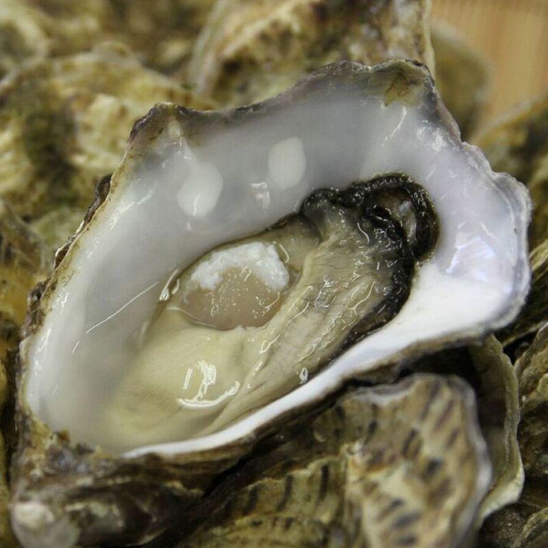 画像1: アイリッシュプレミアム殻付牡蠣 (1)