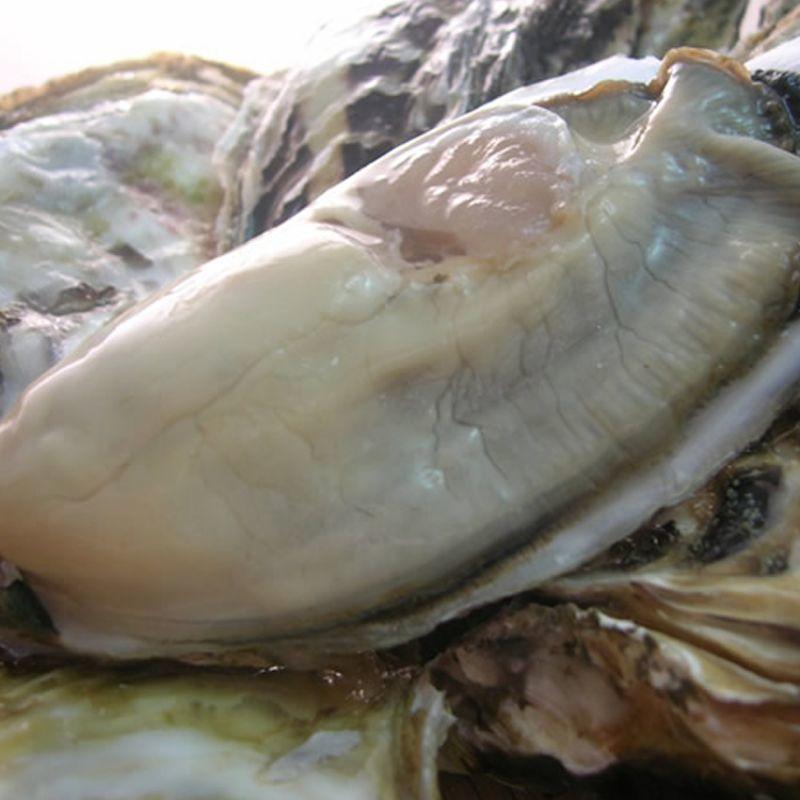 画像1: 長崎五島列島産 真牡蠣と岩牡蠣お得セット (1)