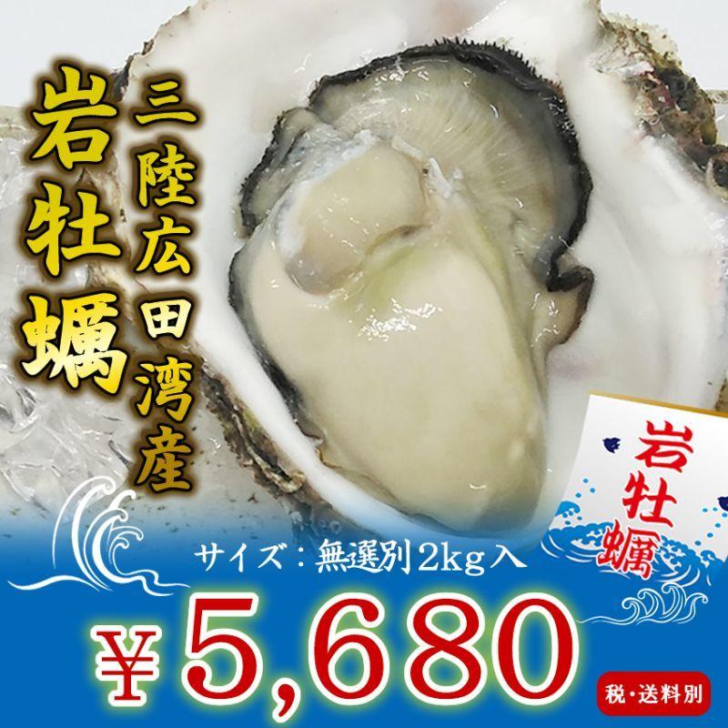 画像1: 三陸広田湾産 岩牡蠣 (1)