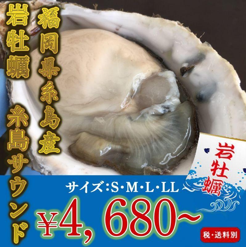 画像1: 福岡糸島産 岩牡蠣糸島サウンド (1)