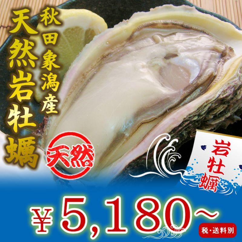 画像1: 秋田象潟産 天然岩牡蠣 (1)
