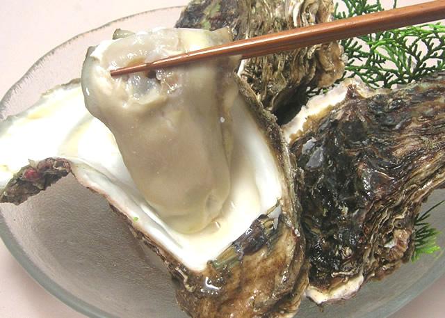 秋田金浦産 天然岩牡蠣
