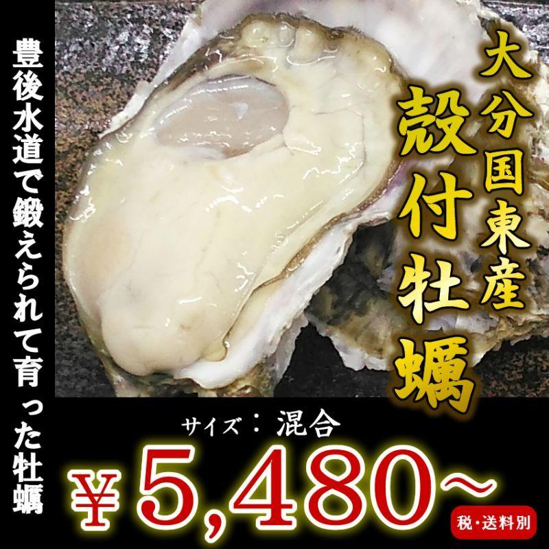 画像1: 大分国東産 殻付牡蠣 (1)